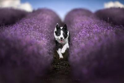 Leep in Purple