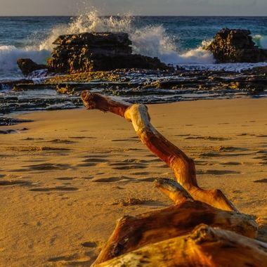 Beach driftwood.