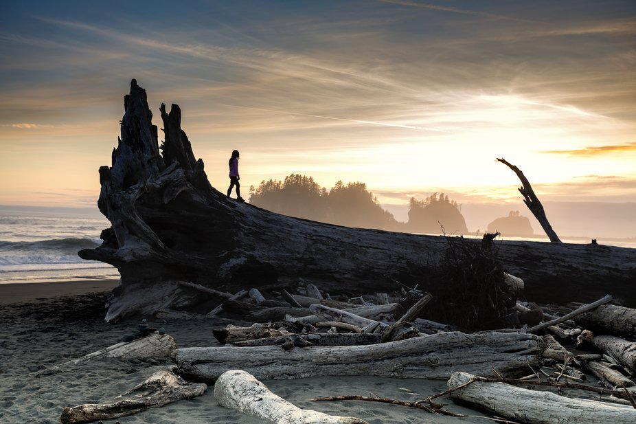 A woman stands upon a massive tree that washed ashore along the coast in Olympic National Park