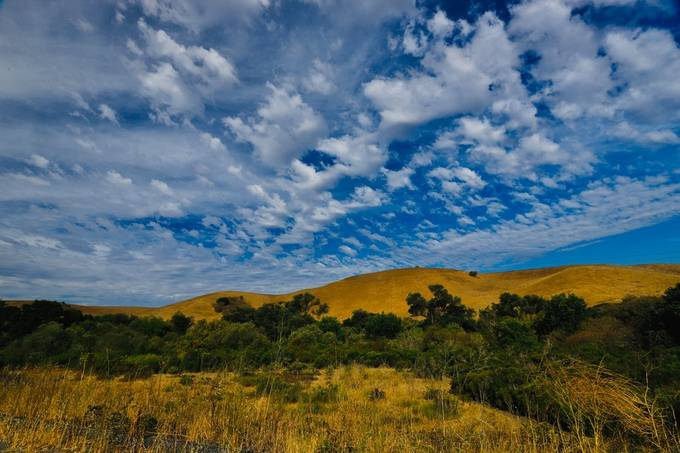 Golden Summer Hills.   Capture this image return home for a business trip as the tectured skies and beautiful morning light was so stunning diffused through the clouds from a sub tropical storm remnant.   Some of my favorite inspirations are the random mo