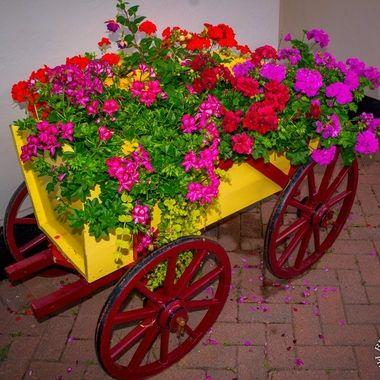 flower-ws-4580