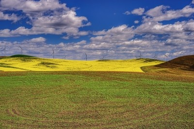 Canola's Field