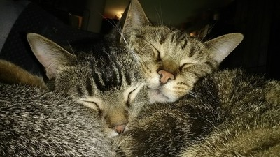 Uno and Humphrey