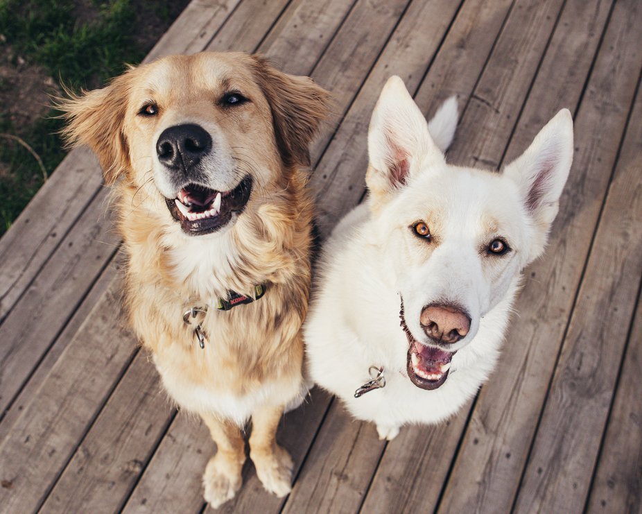 My terror twins. These two dogs are my world. And are so photogenic.