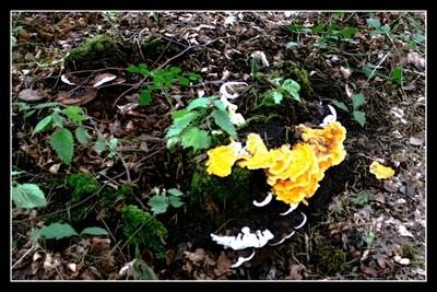 Early Mushrooms