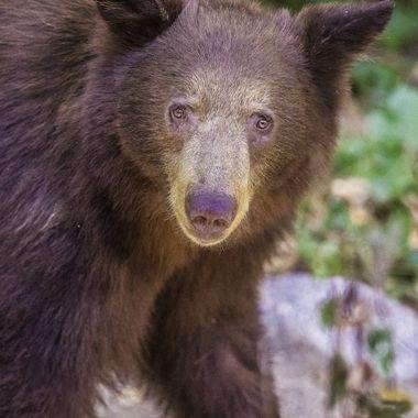 Black Bear DSC02248