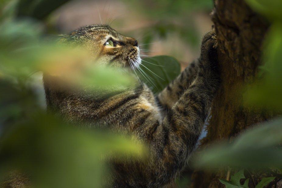A cat sharpens its nails
