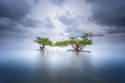 The beauty of mangrove tree