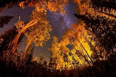 Fall nighs in the forest .9