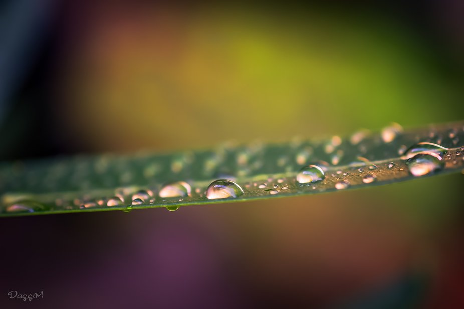 The magic of sun and rain
