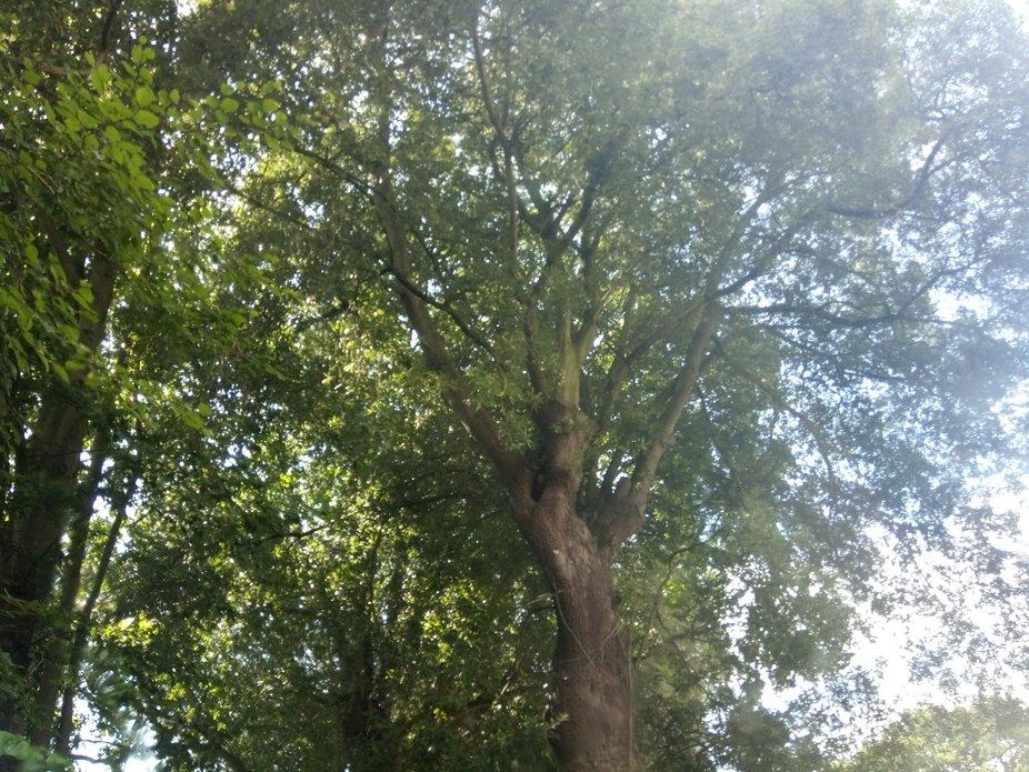 Tree shot 1