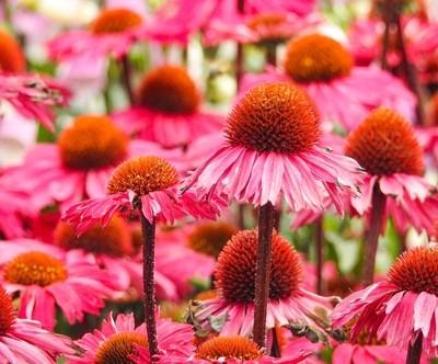 Pillow pink, wild flowers