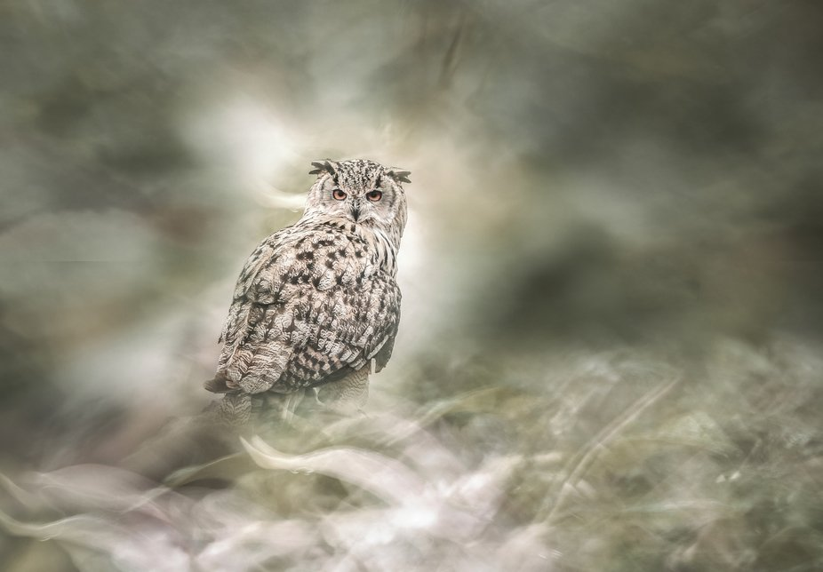 A Eagle owl with surreal background.