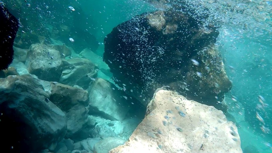 Another wonderful photo from this summer, while I was doing underwater recordings on various loca...