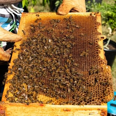 A layer of the hive presented on a hot summer day