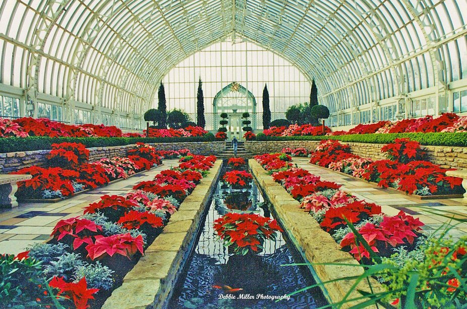 Taken at the Conservatory in St. Paul, Minnesota