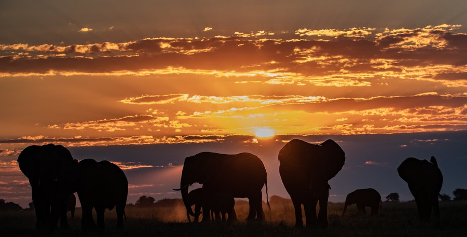 Sunset, The Chobe River in Botswana. The cool air is brushing against your face, there is a multi...