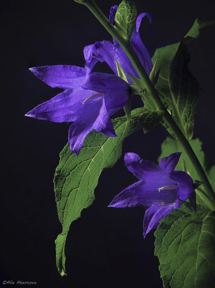 Purple Of My Dreams