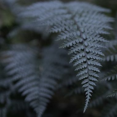 Ferns  near and far