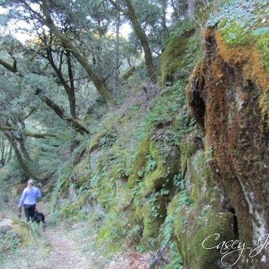 Dusk hike