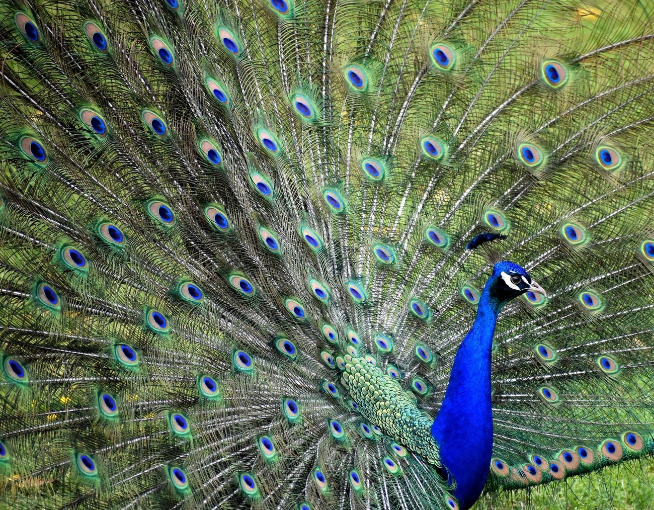 These photos are from a trip to the Botanical Gardens and the Zoo. The peacock was very eager to show off his gorgeous tail feathers.