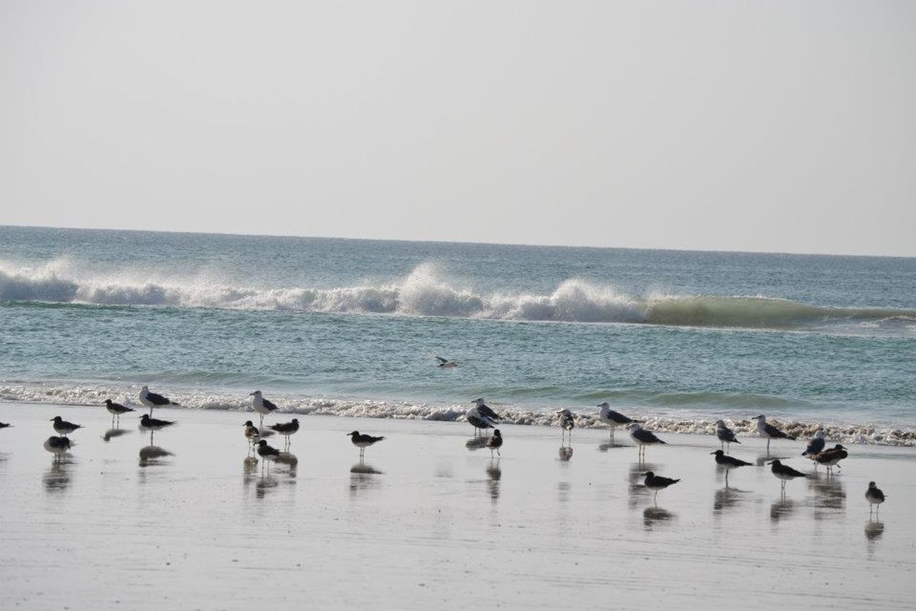 The birds were having a blast picking at the little lunches dug up by the waves. Salalah, Oman.