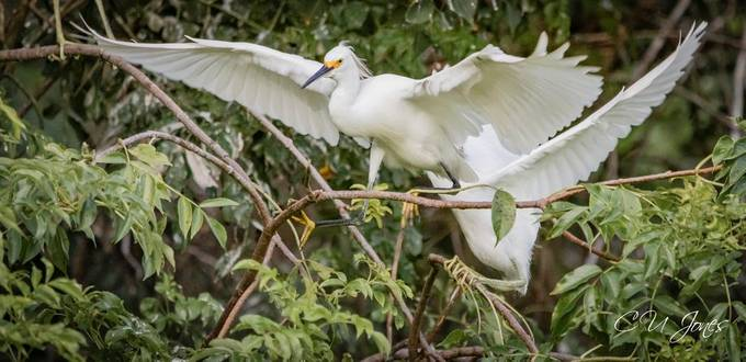 Birds of Port Royal- Cypress Wetlands