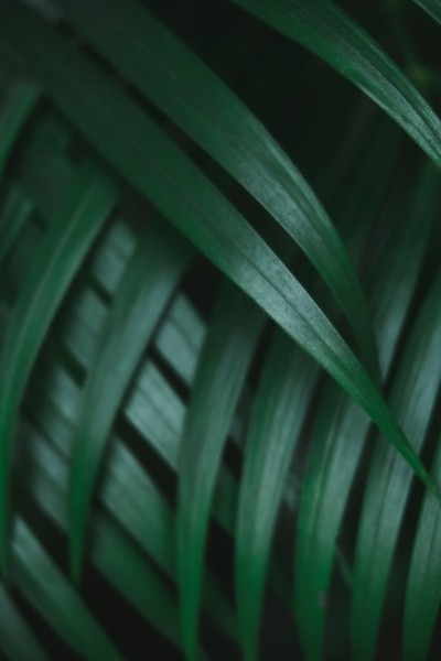Deep dark green palm leaves pattern