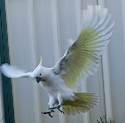 landing in my backyard