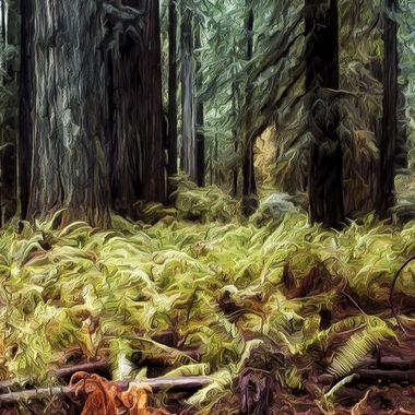 CA Redwood Forest_