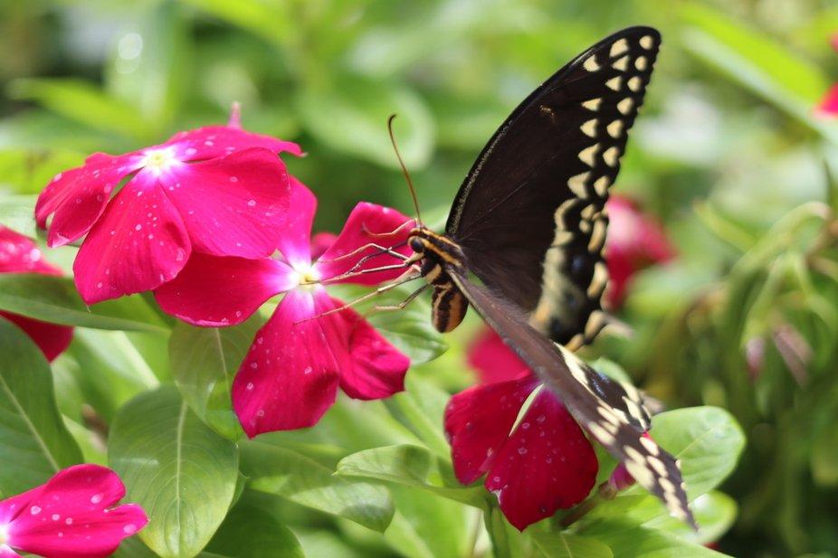 Pollinating Fun