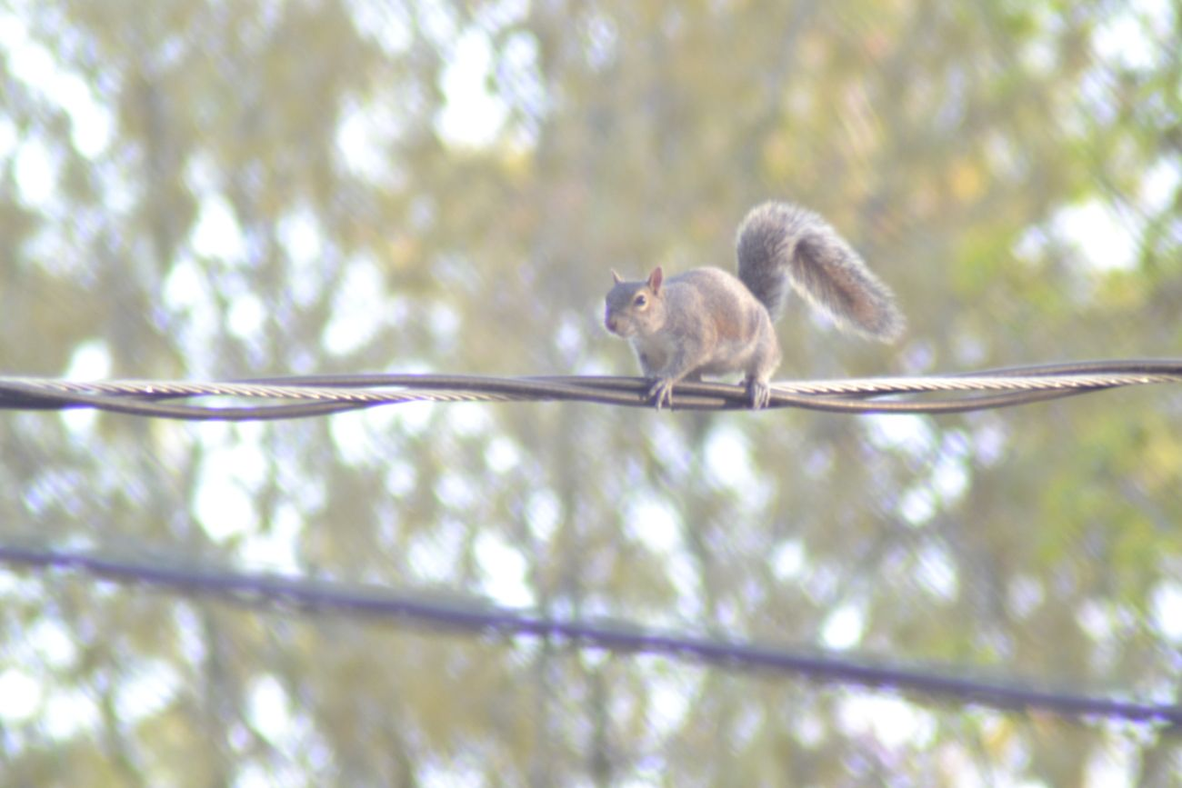 Taken 04/15/2018 from front yard peering into cul-de-sac.  Practice photos with squirrels as a subject.
