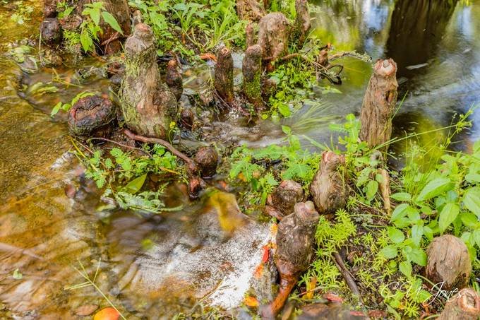Cypress Gardens- Aug 2020 Located in Moncks Corner, SC
