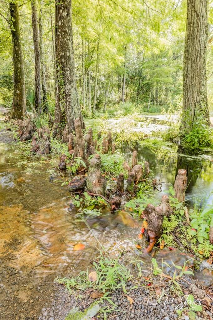 Cypress Gardens- Aug 2020