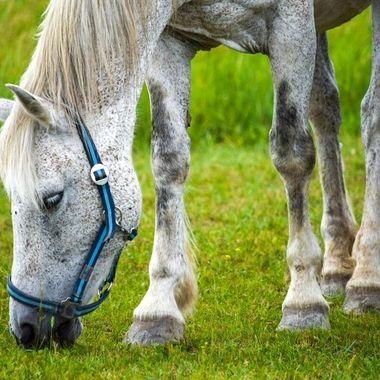 A beautiful white horse with white eyelashes