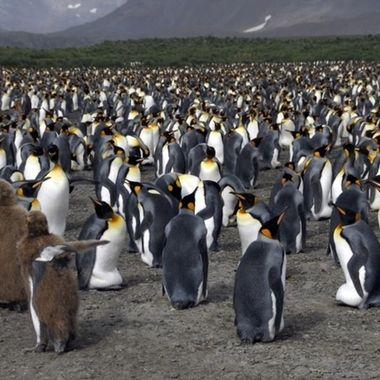 Rulers of Antarctica!