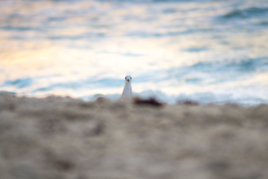 An old shot from a trip to the beach. It feels as if that little guy was looking straight into th...