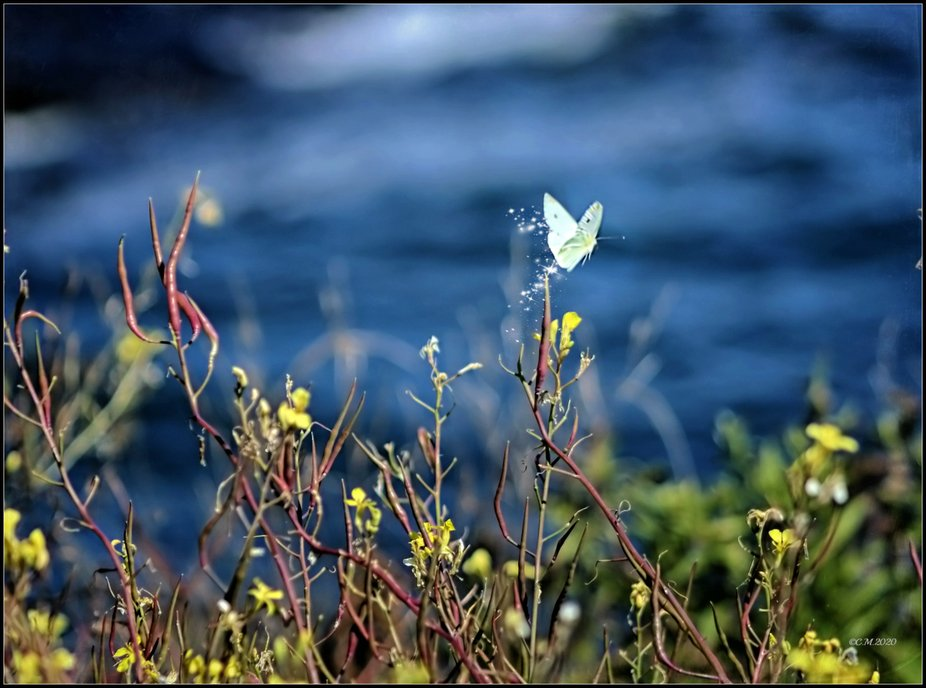 Shot of a white butterfly flying off from a branch of a bush. I added sparkle to it's de...