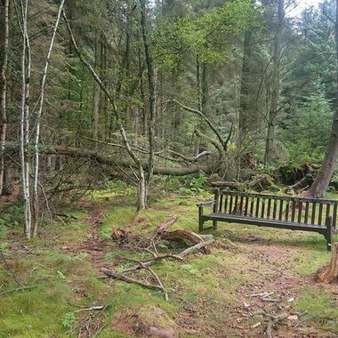 A lonely bench on an abandoned trail in the Anderson Wood.