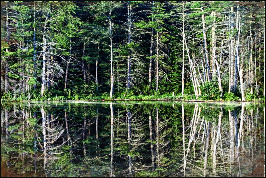 Shot of a reflected forest near a lake in Windham, Maine.