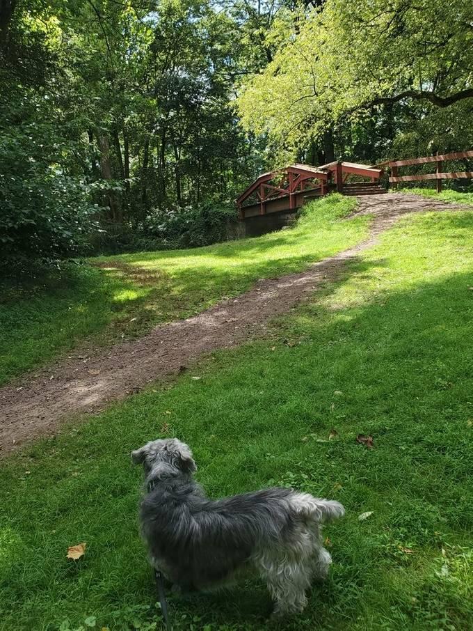 my dog enjoying thw solitude at Washington's Crossing, P