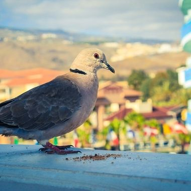 Feeding a pigeon from our hotel balcony