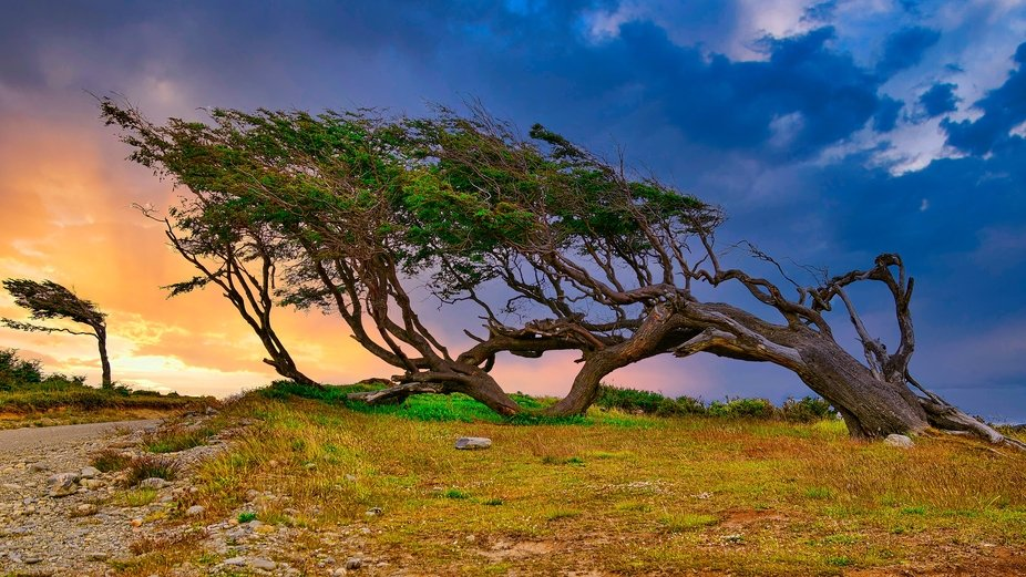 Trees are blown in the direction of the prevailing winds in Tierra del Fuego - the End of the World