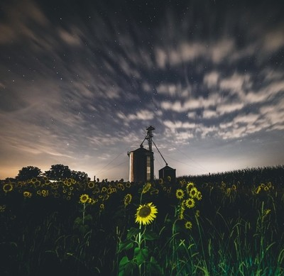 Clouds and stars over a small sunflower field in southern Ohio