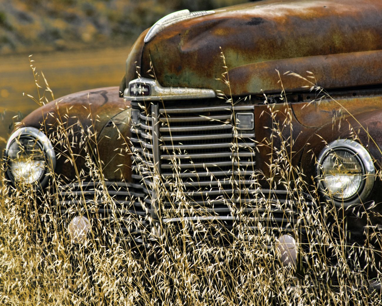 Old International Truck sitting in the weeds