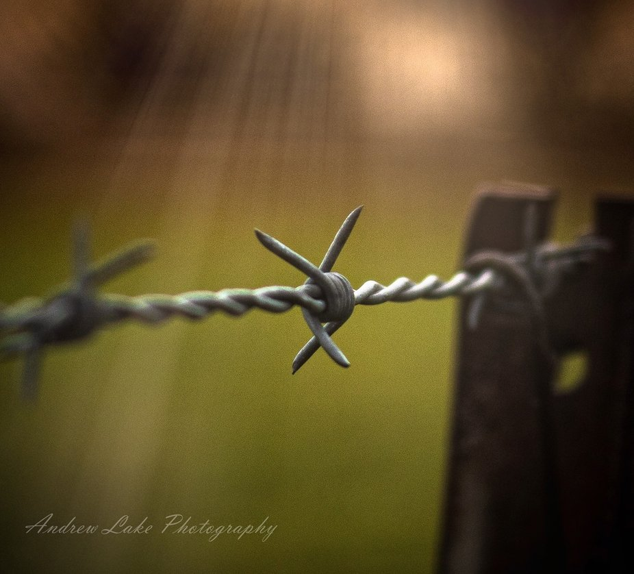 Barbed wire & sunrays