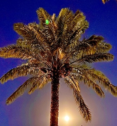 Moon behind the Palm tree