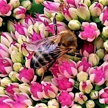 VID_20200905_143333_Moment Bees7 - Copy