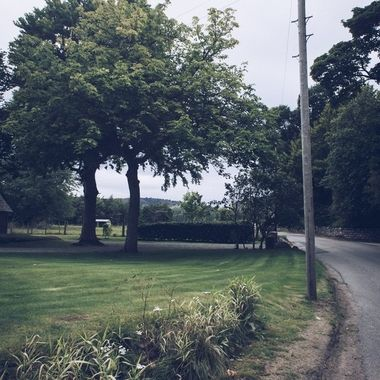 Trees along a driveway