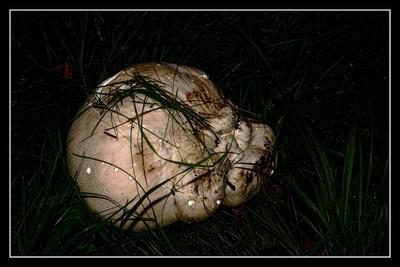 Nature photos at night